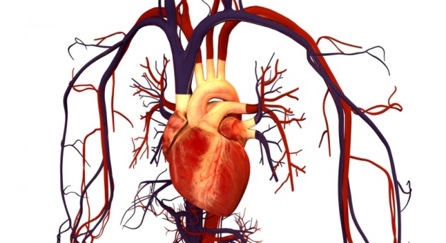 Full sized beating human hearts grown from stem cells by scientists heart disease remains the leading cause of death in the us claiming the lives of more than 600000 people each year its also one of the most costly ccuart Image collections